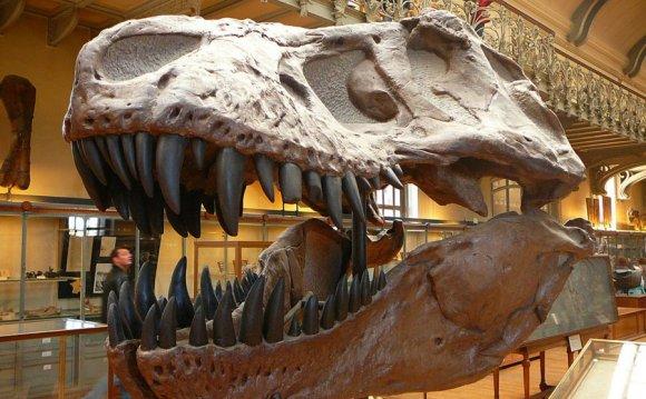 The dinosaurs at Paris Natural